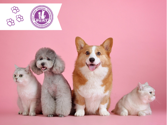 group of dogs and cats sitting in front of a pink wall, purt carpet cleaning badge on banner in the left corner